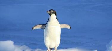 עדכון פינגווין